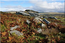SX5373 : Heckwood Tor by jeff collins
