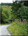 SN7664 : Forestry road south-east of Strata Florida, Ceredigion by Roger  Kidd