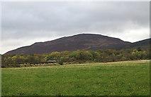 NR9130 : Field at Shedog by Trevor Littlewood