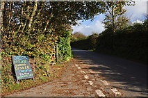 SS8928 : West Somerset : Country Lane by Lewis Clarke