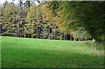 SS8928 : West Somerset : Grassy Field by Lewis Clarke