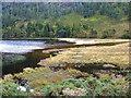 T0996 : Delta of the Glenealo River by Oliver Dixon