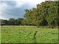 SU9861 : Paddocks near Chobham by Alan Hunt