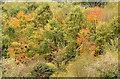 J3370 : Autumn trees, Lagan Meadows, Belfast (October 2014) by Albert Bridge
