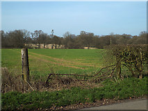 SP0874 : Grass crop by Barkers Lane, Inkford by Robin Stott