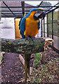 TA0527 : Pickering Park parrot, Hull by Paul Harrop