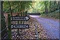 NN9556 : Squirrel Crossing at Croftinloan by Ian S