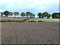 NT5927 : Newly ploughed field at Longnewton by Oliver Dixon