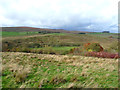 NY8988 : View across Redesdale by Oliver Dixon