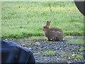 SO1053 : Rabbit by the Caravan by Bill Nicholls