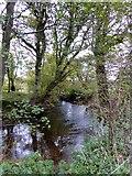 SS6807 : River Taw near Coldridge Bridge by David Smith