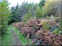 SS6808 : The Tarka Trail in Burrowcleave Wood (1)  by David Smith