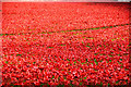 TQ3380 : London : Tower Hamlets - Tower of London Poppies by Lewis Clarke