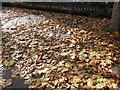 TF0920 : Maple leaves by Bob Harvey