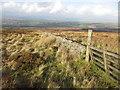 NS5584 : Seldom used gate by David Robertson