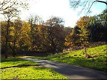 NZ3955 : Autumn colours, Backhouse Park, Sunderland by Malc McDonald