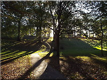 NZ3955 : Autumn light, Backhouse Park, Sunderland by Malc McDonald