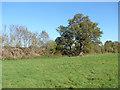 TQ0753 : Tree by the tracks by Alan Hunt