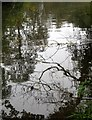 ST6376 : Reflections, River Frome by Derek Harper