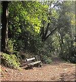 SX9065 : Bench, Chapel Hill Woods by Derek Harper