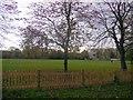 TQ2479 : Cricket Pitch, Holland Park by Paul Gillett