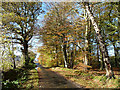 NY4857 : Autumn colours at Corby Lea by Oliver Dixon