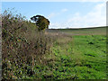 NY4952 : Hedgerow and field off Randlaw Lane by Oliver Dixon