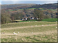 NY5355 : Field with sheep near Castle Carrock by Oliver Dixon