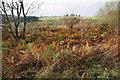 SO1685 : Scrubby land on the edge of Coed Nantyrhynnau by Bill Boaden