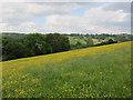 SO3530 : Field near Cwmdulas Farm by Hugh Venables