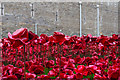 TQ3380 : Tower poppies by Ian Capper
