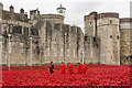 TQ3380 : Chelsea Pensioners visiting the Tower poppies by Ian Capper