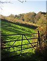 SX3869 : Hillside and Wheal Langford by Derek Harper