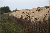 SK9141 : Teasels and new stones next to railway bridge ABE1/7 on Sand Lane, Barkston by Chris