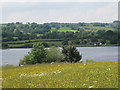 SJ9959 : Meadow above the reservoir by Stephen Craven