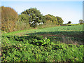 TG2600 : Brassica crop field east of Wash Lane by Evelyn Simak