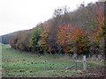 SE9063 : Shades  of  Autumn  Mowthorpe  Dale by Martin Dawes