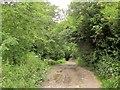 ST9624 : Old Shaftesbury Drove by Derek Harper