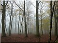 SP9308 : Autumnal trees in the mist - Roundhill Wood by Rob Farrow