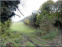 TQ1853 : Field by Cockshot Cottage, Mickleham by David Howard