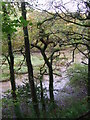 SX3754 : A glimpse of the creek by JThomas