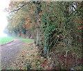 TM1999 : Public footpath to Bracon Ash by Evelyn Simak