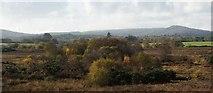 SY9282 : Middlebere Heath, Wareham, Dorset by Peter Elsdon