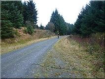 SN8450 : Forest track high on Pen y Garn by Richard Law