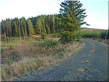 SN8546 : Bend in forest track at the head of the Nant Gyrnant by Richard Law