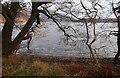 NM9834 : Airds Point across Loch Etive by Alan Reid