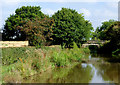 SJ8459 : Macclesfield Canal north of Ackers Crossing, Cheshire by Roger  Kidd