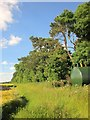 SU2868 : Tree belt near Froxfield by Derek Harper