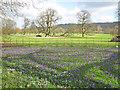 ST9168 : Crocus at Lacock Abbey - 2 by Trevor Rickard
