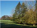 TQ0750 : Small copse, Woodcote Farm by Alan Hunt